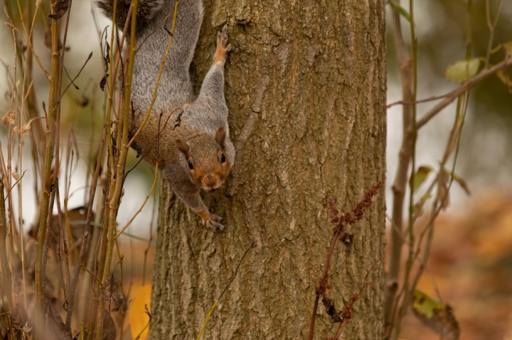 4_Squirrel